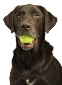 dogwithtennisball